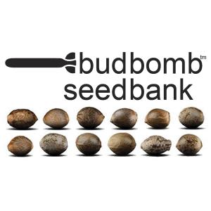 budbomb Seedbank